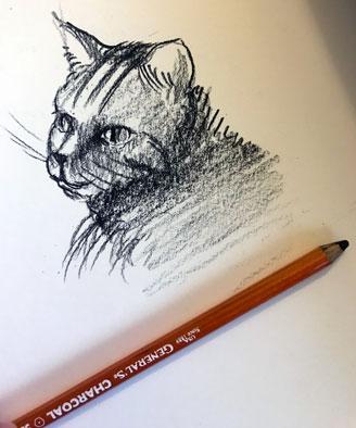 cat-head-drawing-generals-charcoal